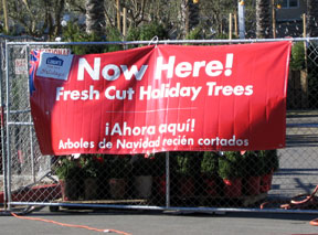we have also removed the banner that read holiday trees from the front of our stores lowes apologizes for any confusion the banner created - Lowes Fresh Cut Christmas Trees