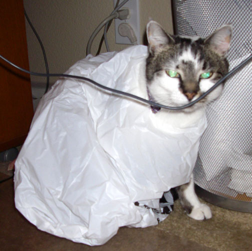 lily cat in a bag