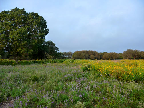 mo ranch meadow